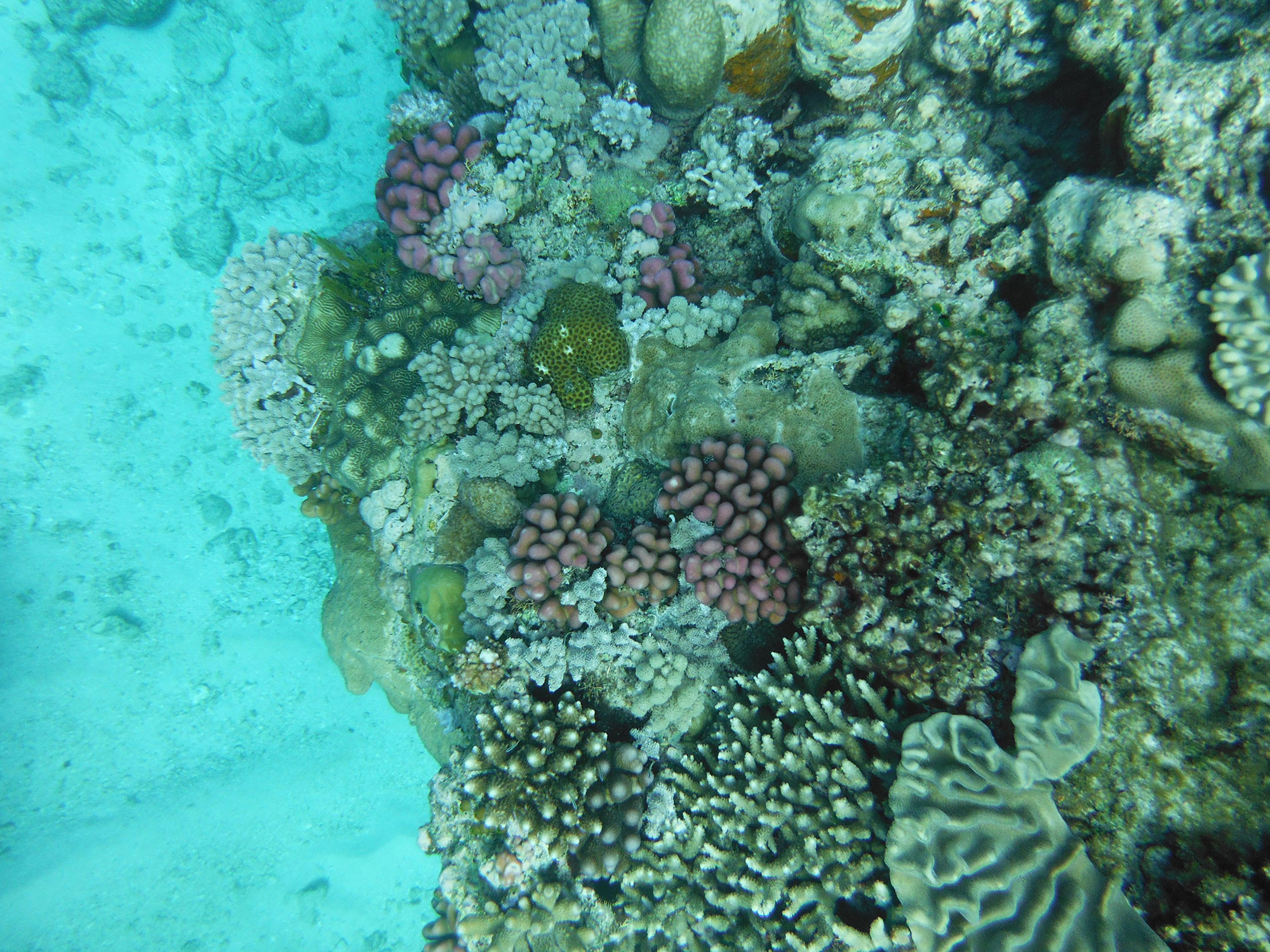 GreatBarrierReef KConnors MorguefileCC web